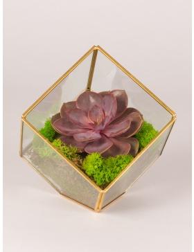 Terariu de sticla in forma de cub