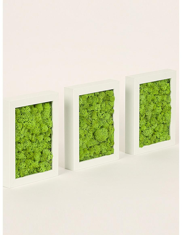 Set 3 rame cu licheni stabilizati