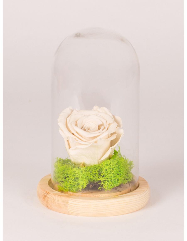 Trandafir conservat  in clopot de sticla cu platou de lemn