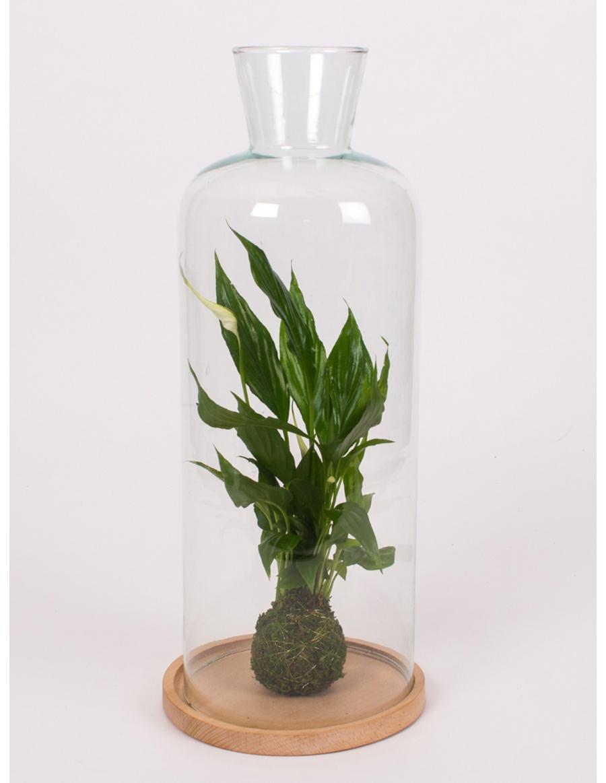 Clopot de sticla h44cm cu planta verde