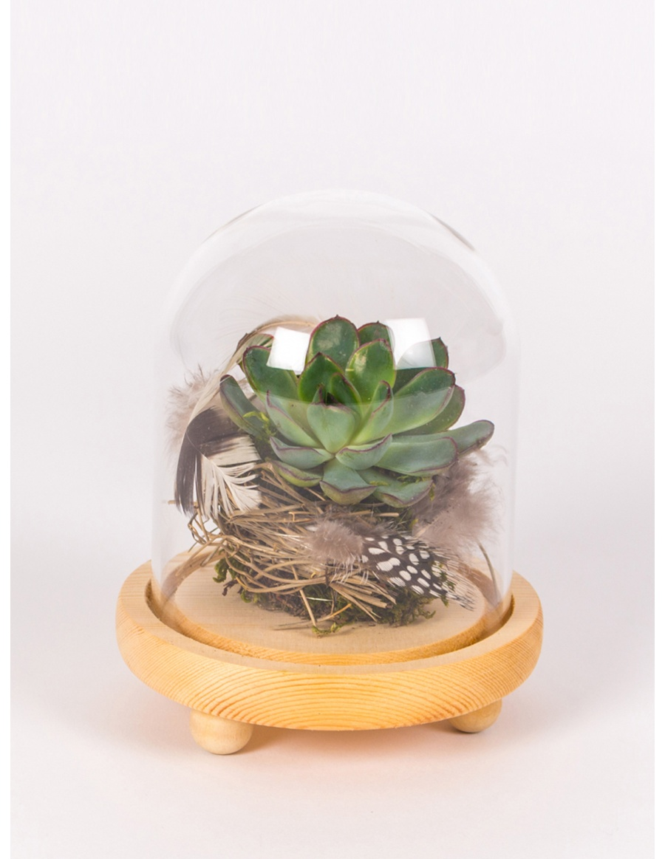 Suculenta in clopot de sticla cu platou de lemn