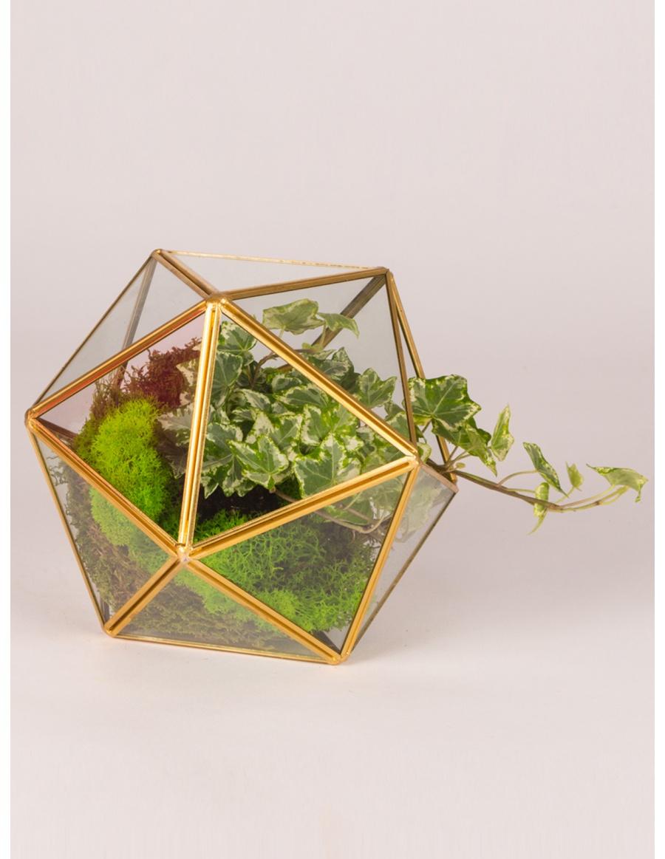 Terariu de sticla in forma de sfera cu planta