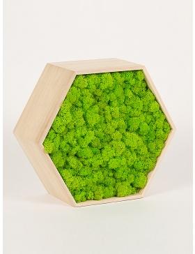 Rama hexagon cu licheni stabilizati