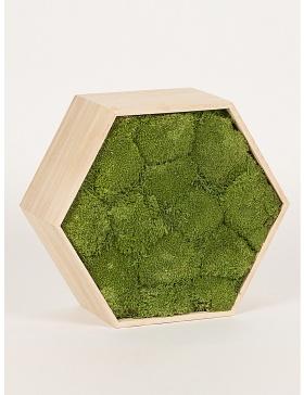Rama hexagon muschi verde conservat