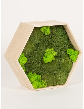 Rama hexagon cu 3 tipuri de muschi verde conservat