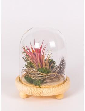 Planta aeriana in clopot de sticla cu platou de lemn