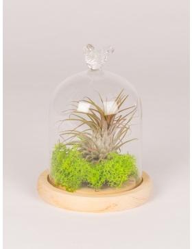 Planta in clopot de sticla