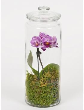 Terariu cu orhidee si muschi