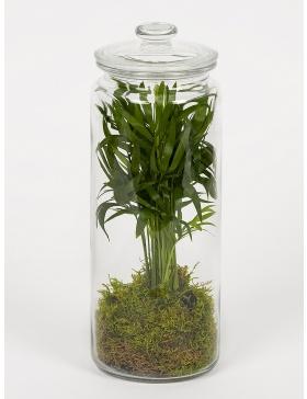 Terariu cu planta verde