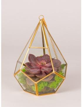Terariu de sticla in forma de diamant cu planta