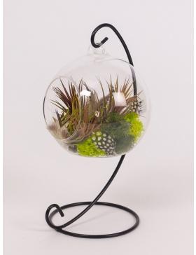 Plante aeriene in glob de sticla